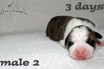 3 Tage